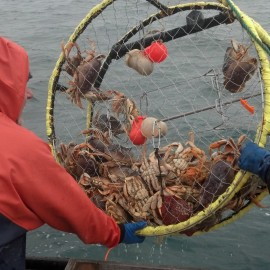 Being a Greenhorn on a commercial Crabbing Boat